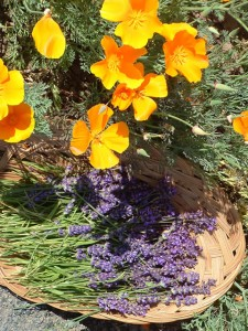 There are many complimentary color combinations which can be found in the healing garden.